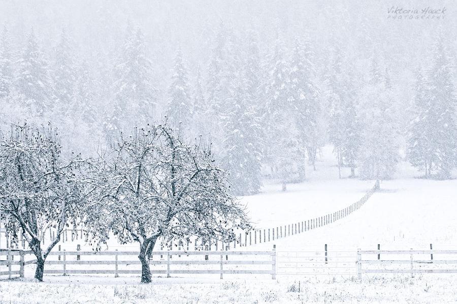 silent_snow_by_islandtime_d4jje7z-fullview